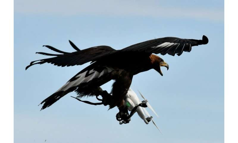 An eagle seizing a drone at a French air force training centre