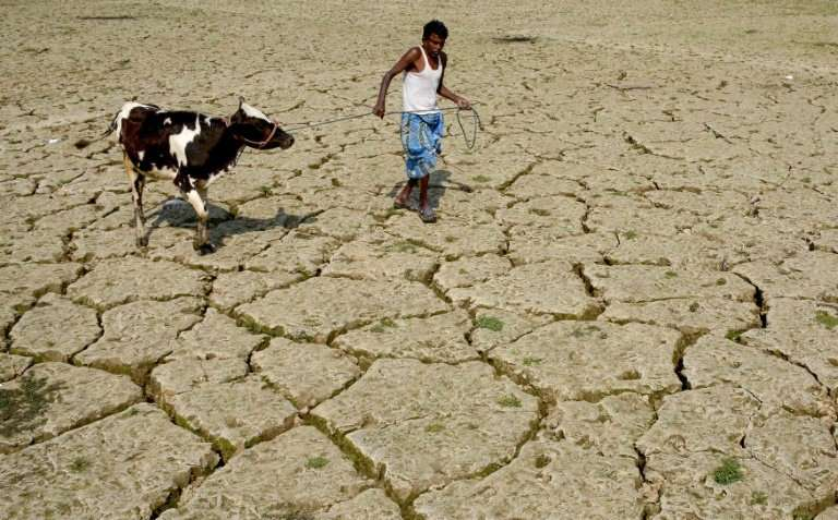 An Indian farmer and his cow walk on a dried paddy field in the village of Srilankabasti, on the outskirts of Agartala, the capi