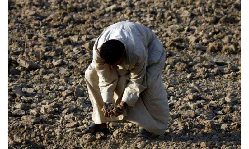 An Iraqi man checks a dry field in an area affected by drought in the Mishkhab region, central Iraq, some 25 kilometres from Naj