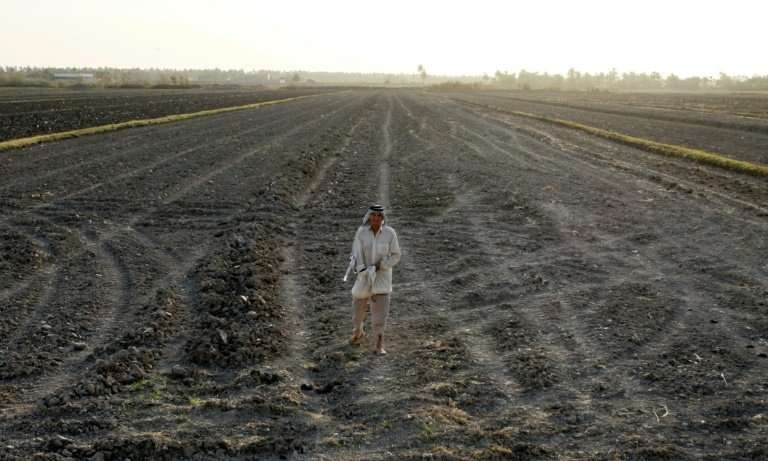 An Iraqi man stands on a dry field in an area affected by drought in the Mishkhab region, central Iraq, some 25 kilometres from