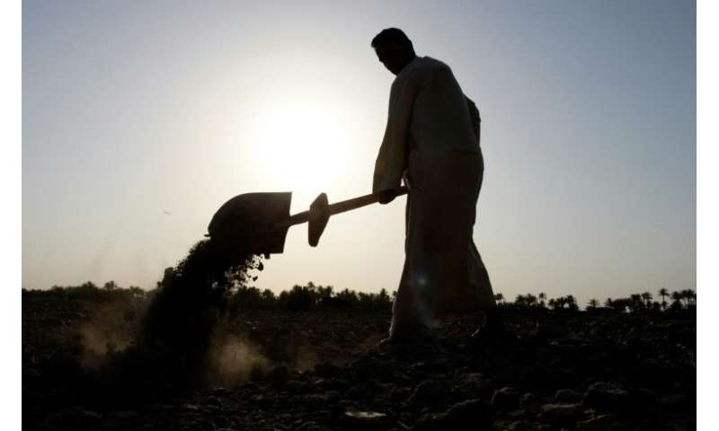 An Iraqi man uses a shovel on dry field in an area affected by drought in the Mishkhab region, central Iraq, some 25 kilometres
