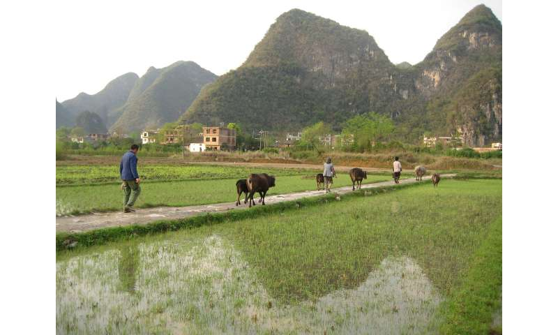 Another problem with China's coal—mercury in rice