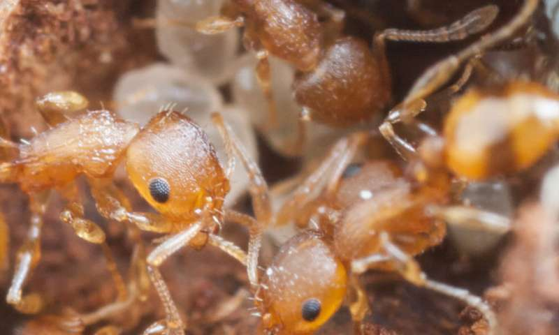 Ants, acorns and climate change