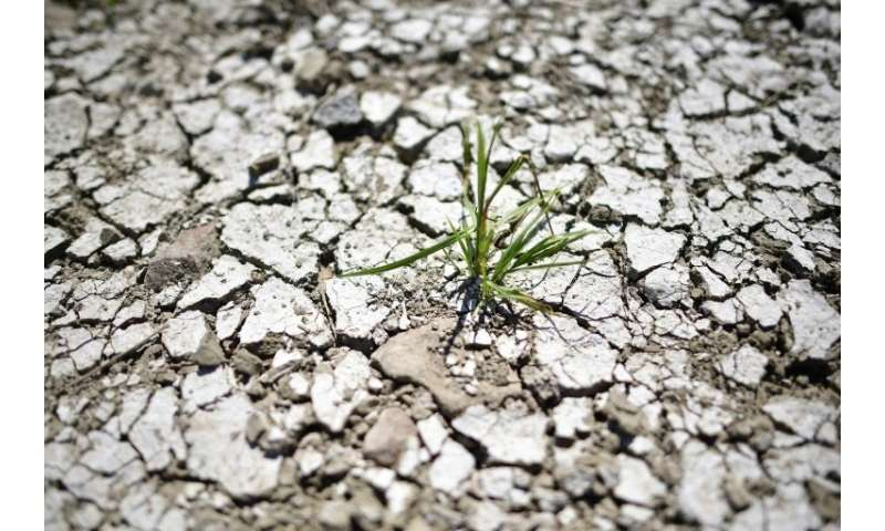A plant is pictured at the dried out riverbank of Elbe in Magdeburg