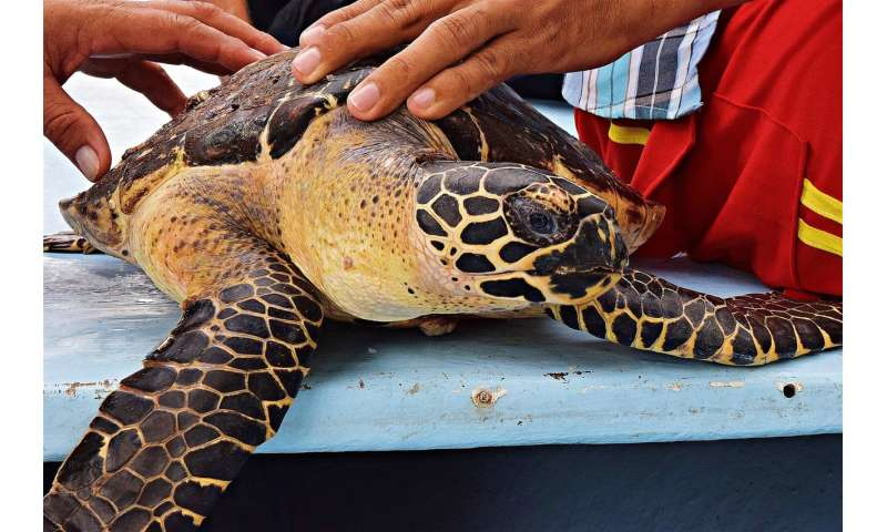 A sea turtle paradise in the land of lakes and volcanoes Aseaturtlepa