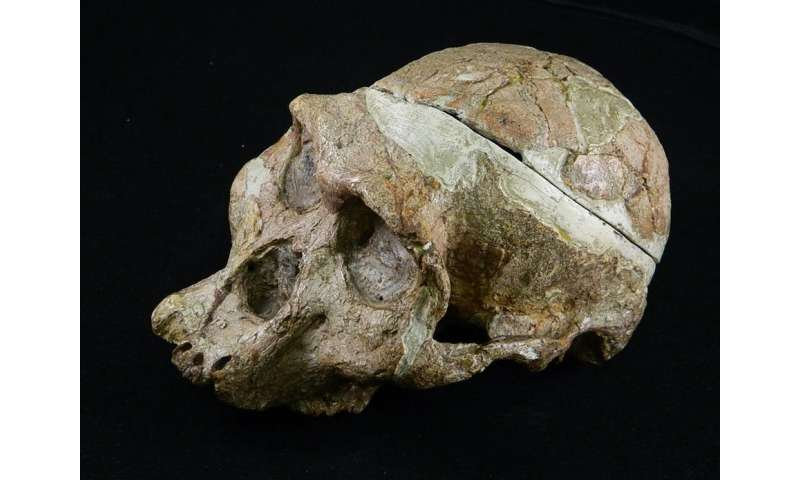 A study of the tooth sockets of famous skull leads to reconsideration of gender