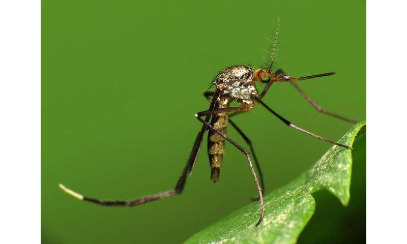 As Venezuela's public health system collapses, mosquito-borne viruses re-emerge