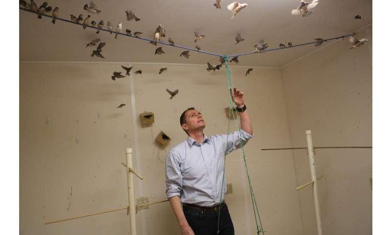 At AAAS: Reducing bird-related tragedy through understanding bird behavior