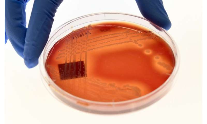 A team of scientists in Australia warned in September of the spread of a bacteria, staphylococcus epidermidis, immune to all kno
