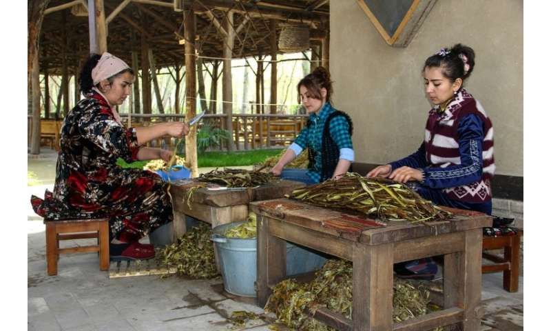 At Zarif Mukhtarov's paper mill in the village of Koni Ghil, outside Samarkand, paper comes from the branches of young mulberry