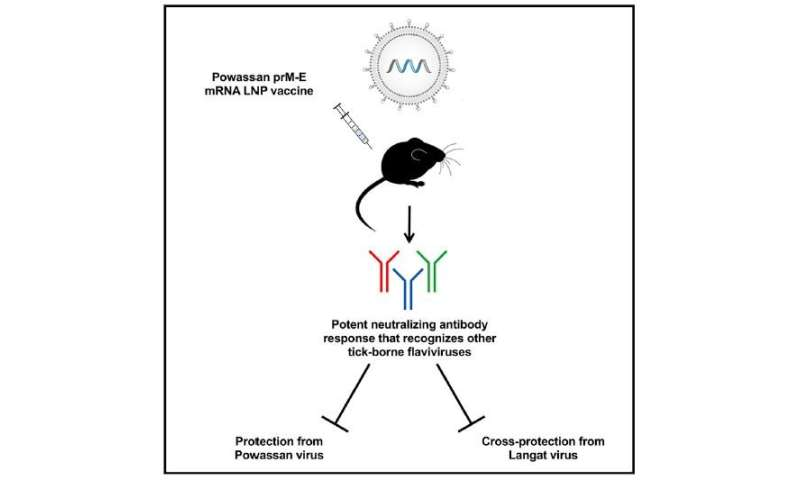 A versatile vaccine that can protect mice from emerging tick-borne viruses
