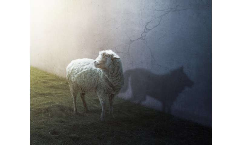 A wolf in sheep's clothing: Disruption is overrated in terms of innovation