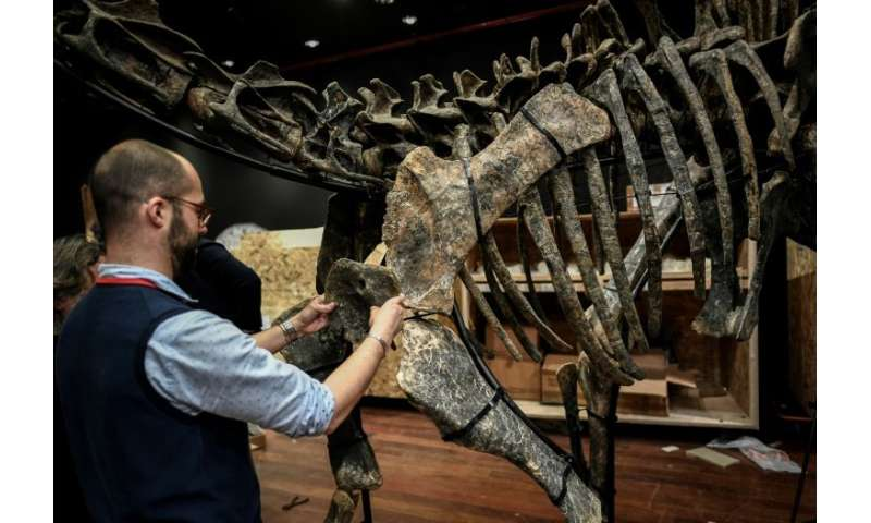 A worker assembles the bones of a diplodocus, one of two dinosaur skeletons being sold at auction in Paris on Wednesday