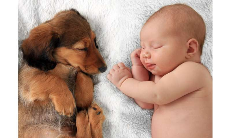 Babies and pets – a guide for new parents