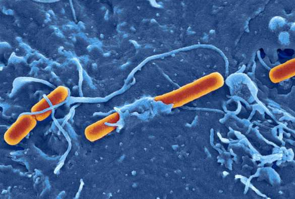 Bacterial 'gene swapping' sparks disease outbreaks