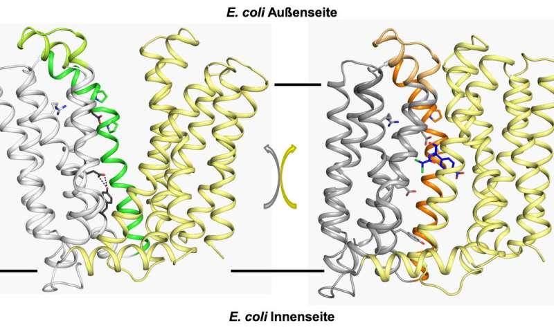 Bacteria: Protein researchers decipher resistance mechanism