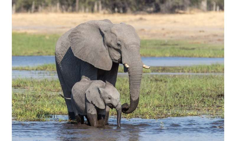 Batswana set to weigh in on whether ban on elephant hunting should be lifted