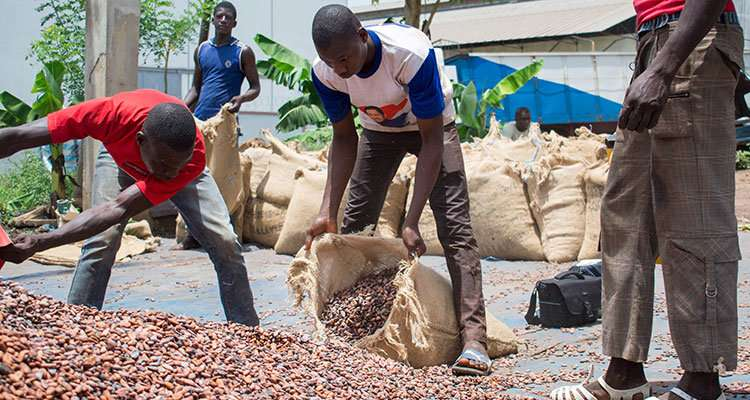 Better cocoa crops for better livelihoods
