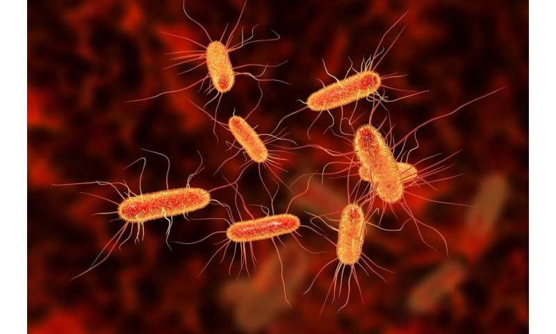 Biophysicists discover how small populations of bacteria survive treatment
