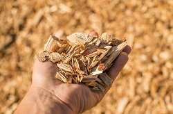 Bioplastics sourced from wood