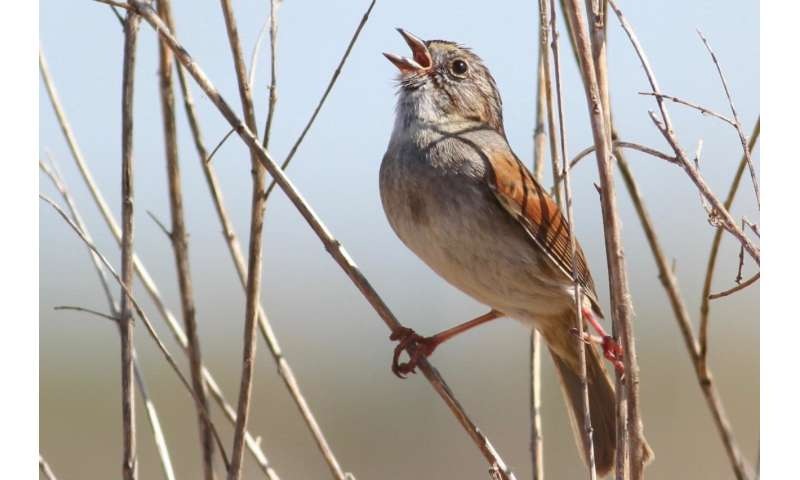 Birds have time-honored traditions, too