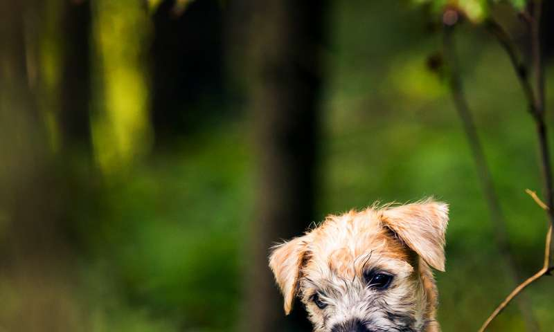 Blame the mother's gene: Discovery for a blinding canine eye disease