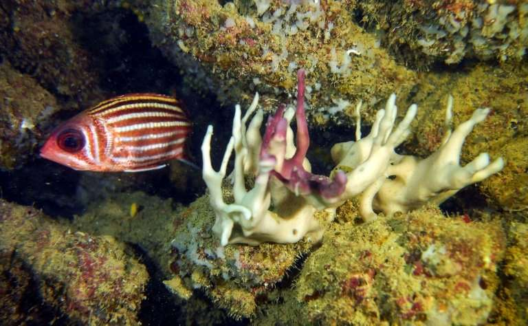Bleaching of coral and sponges is taking place in the Mediterranean sea due to an increase in water temperature caused by global