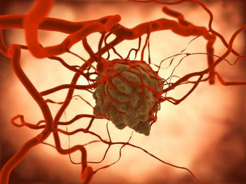 Blood vessel-forming cells involved in aggressive brain tumour