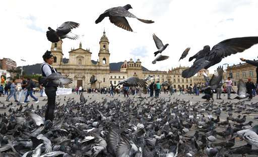Bogota implores tourists to stop feeding pigeons