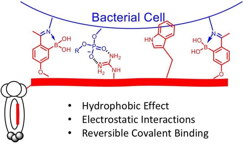 Boston College team reports technology to enable precision antibiotics
