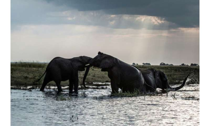 Botswana mulls reviewing a 2014 ban on hunting for sport