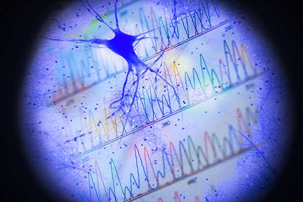 Brain cells record their activity in gene expression, new study finds