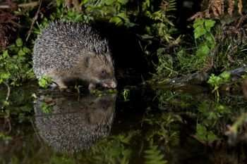 British mammals' fight for survival