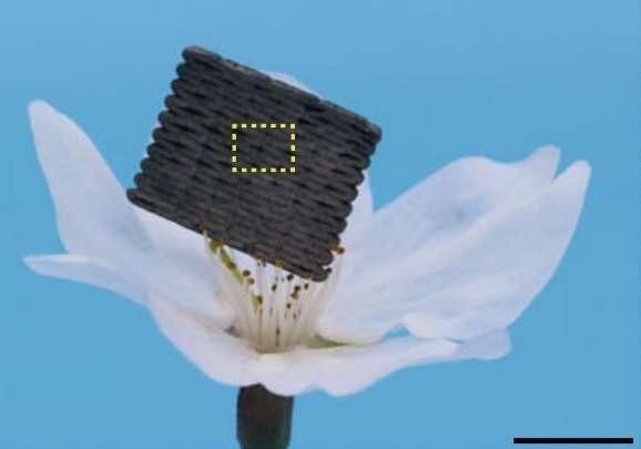 carbon aerogels