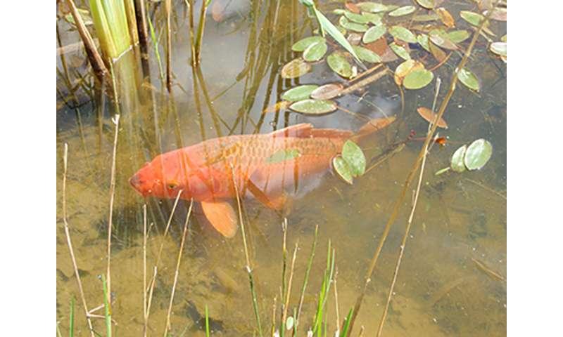 Carpe solis – sunbathing fish defy the laws of nature