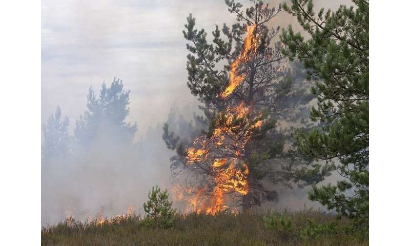 CDC: wildfire smoke poses health risks