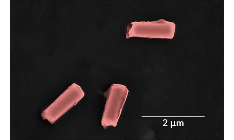 Cell-like nanorobots clear bacteria and toxins from blood