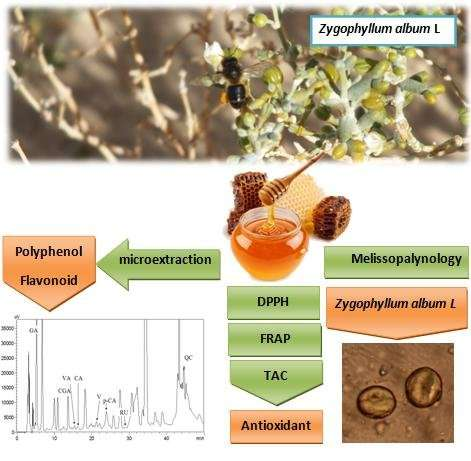 Characterization of Zygophyllum album L monofloral honey from El-Oued, Algeria