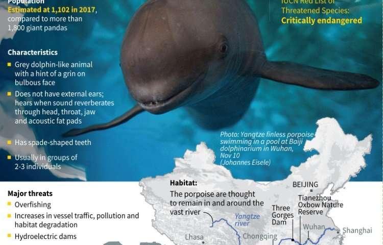 China's finless porpoise