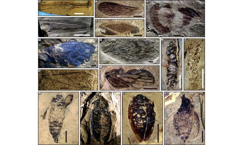 Chinese fossils reveal middle-late Triassic insect radiation