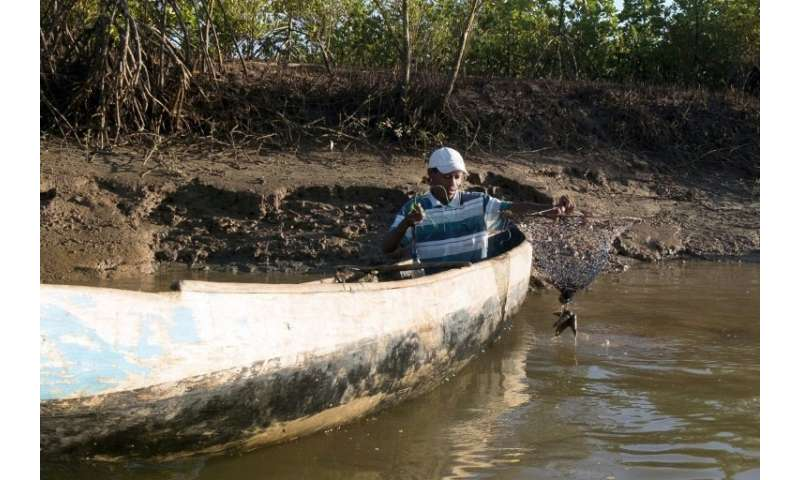 Clement Joseph Rabenabdreasana, 36, catches crabs in a mangrove near the village of Beanjavilo in western Madagascar, which alon