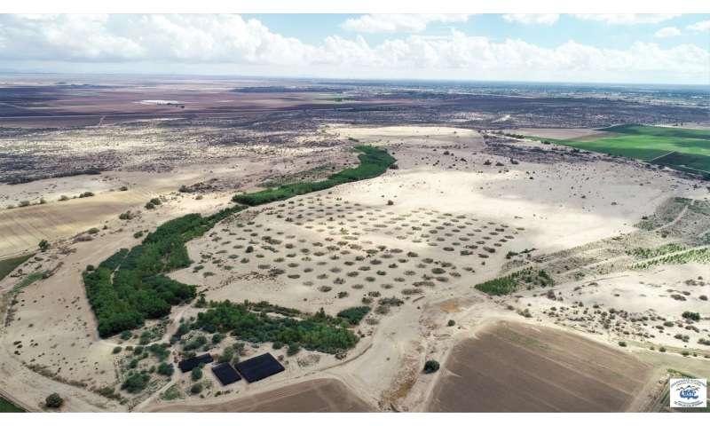 Colorado River Delta report provides restoration road map
