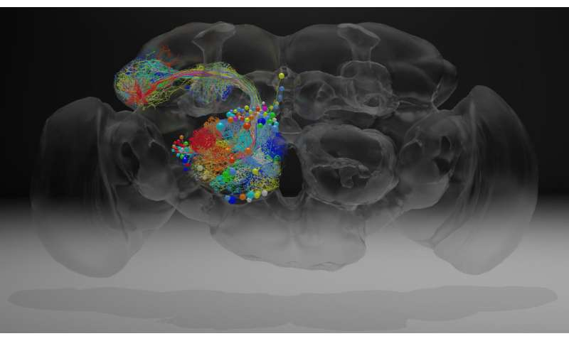 Neuronal Barcodes Shape Complex Networks In The Brain >> Complete Fly Brain Imaged At Nanoscale Resolution