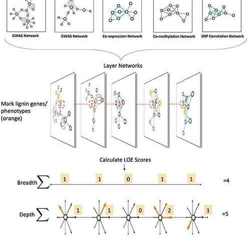 Complex networks identify genes for biofuel crops
