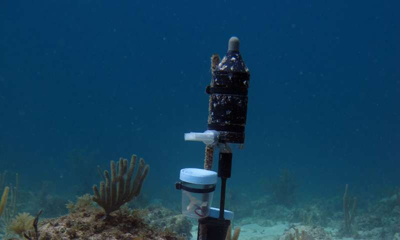 Coral larvae found to prefer a noisy environment