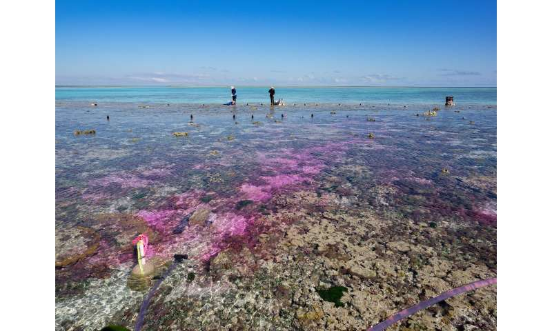 Coral reef experiment shows: Acidification from carbon dioxide slows growth