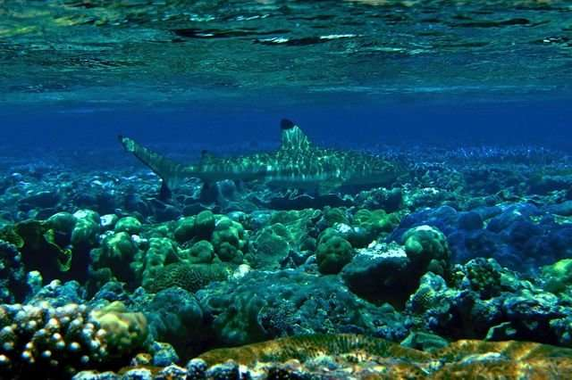Coral reefs in hot water as warming events slow recovery