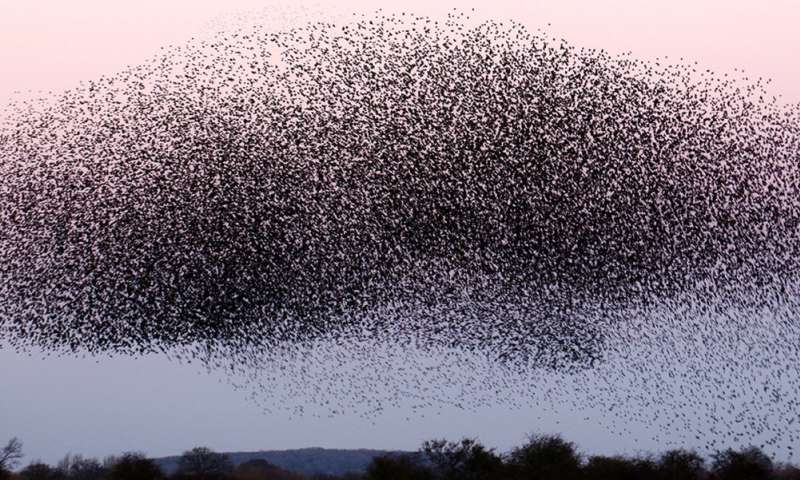 Could studying swarm behaviors teach us how to help drones fly safely?