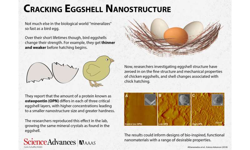Cracking eggshell nanostructure