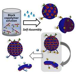 Creation and selective functionalization of virus-like polymer particles